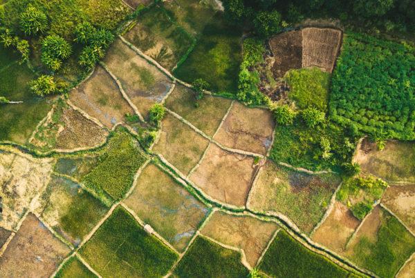 Aerial shot of field