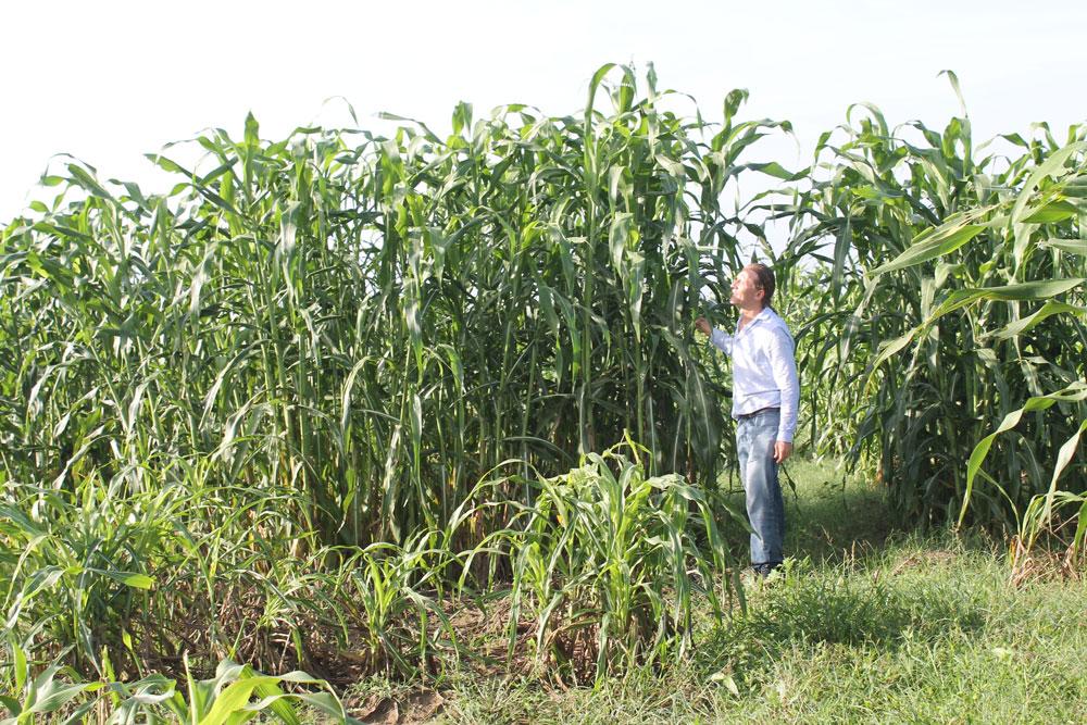 Gael Pressoir review sorghum plant during trials