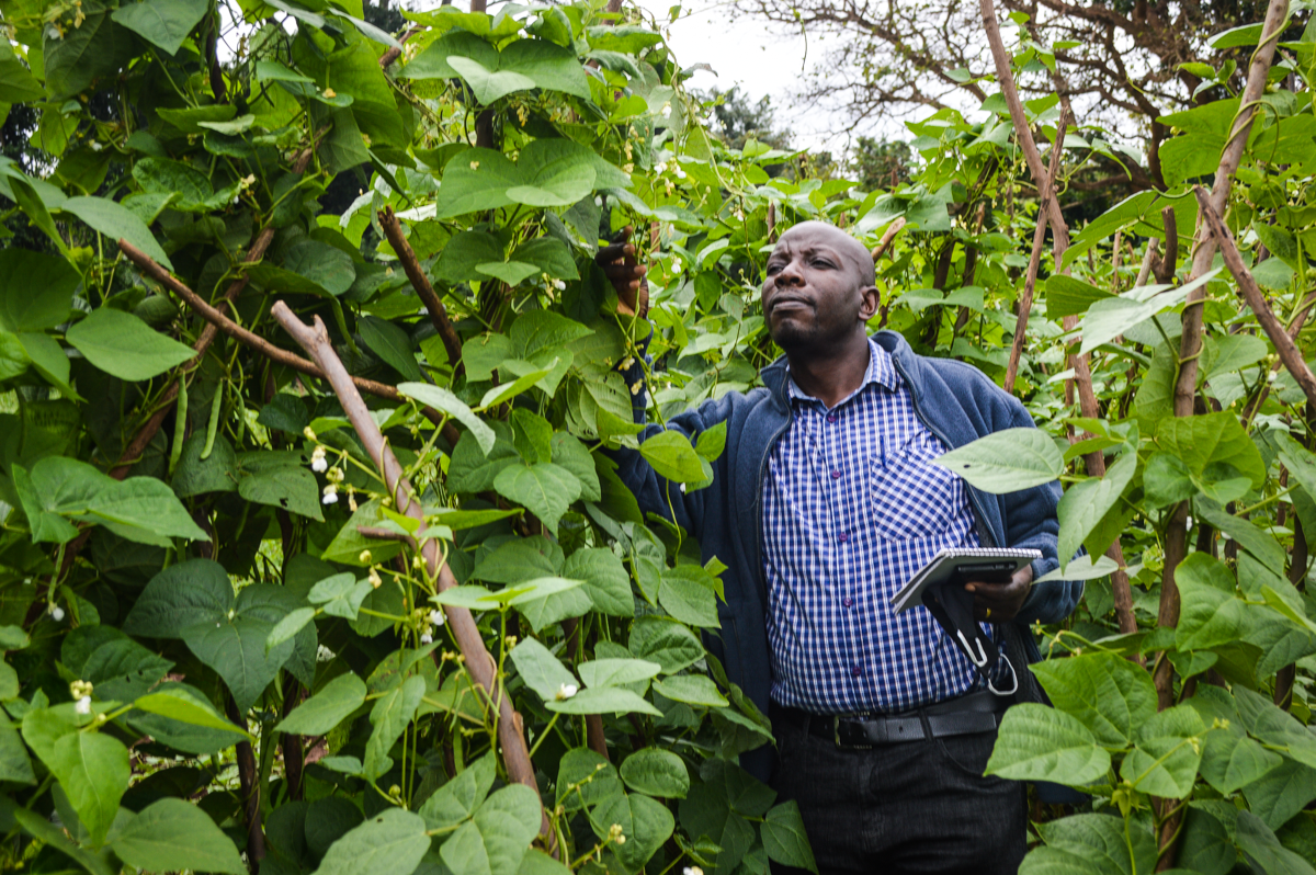 How Ugandan breeders are using genomic selection to boost health and satisfy consumers