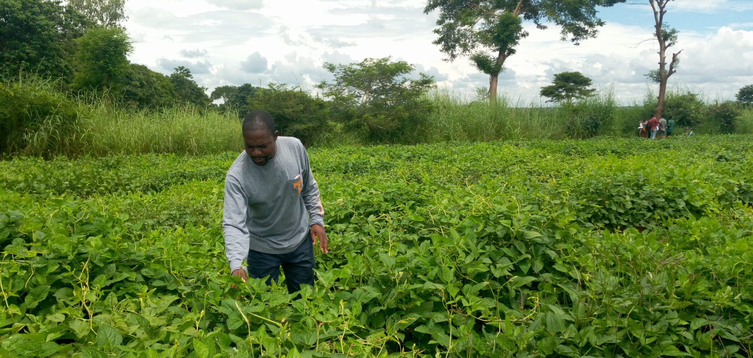 A new approach to an ancient crop:  Elevating the potential of cowpea in Malawi