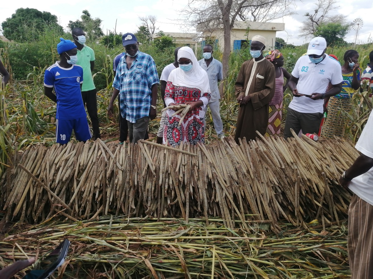 Pioneering an inclusive approach to priority setting in crop improvement